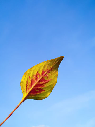Low angle view of leaf against blue sky