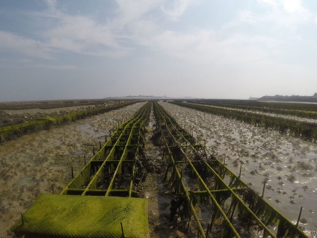 Agriculture Boardwalk Day Diminishing Perspective Extensions Farm Gopro Lowtide  Lowwater No People Oyster  Rain Scenics Sky Straight Symmetry Tide Tides Underwater Water