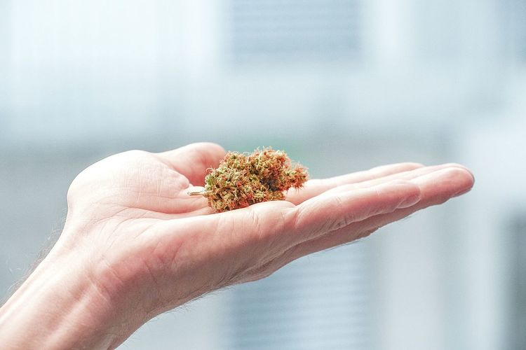 Cropped hand of man holding marijuana