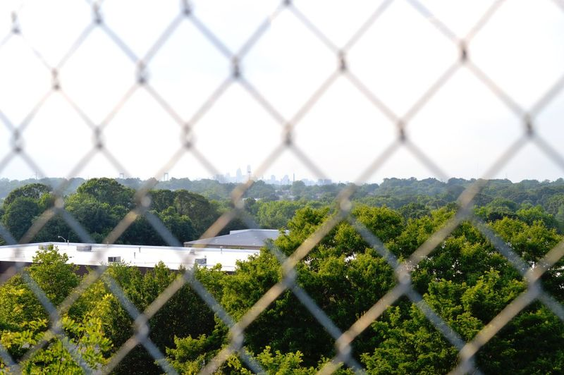 Trees Seen Through Chainlink Fence Against Clear Sky