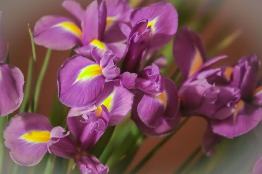 Purple Irises Architecture Abstract Beauty In Nature Bunch Of Flowers Close-up Flower Head Flowers Freshness Irises Lilac Nature No People Petal Pink Color Plant Purple Purple Flower Softness Ultraviolet Vulnerability  Wallpaper