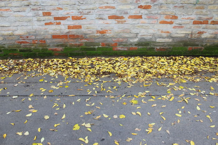 Smooth Autumn Background Bricks Day Fall Moss No People Outdoors Simplycity Street Swept Taking A Walk Wall Wind Yellow Yellow Leaves