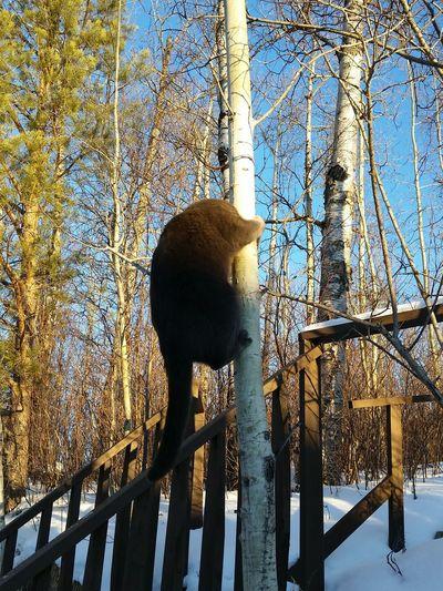 Trees Cat