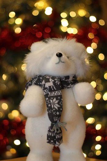 Christmas polar
