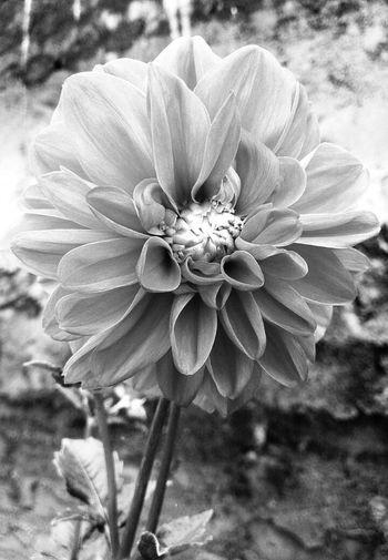 Eye Em Travel The EyeEm Facebook Cover Challenge Mobile Photography Flowers Eye Em Best Shots .......by sony xpera zr....
