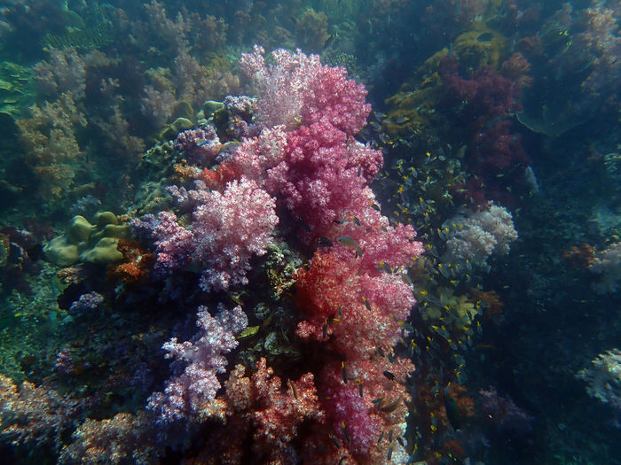 View of coral in sea