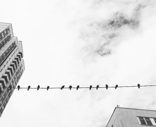 Cloud - Sky No People черно-белое чбфотография чбфото Photoshoot Blackandwhite Black & White Monochrome Birds Sky Social Issues Day Outdoors The Street Photographer - 2017 EyeEm Awards