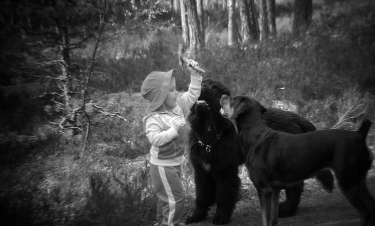 Pikku koirakuiskaaja työssään... ©️JaniVauhkonen EyeEm LG G4 JaniVauhkonen Ninni Koirat EyeEmNewHere
