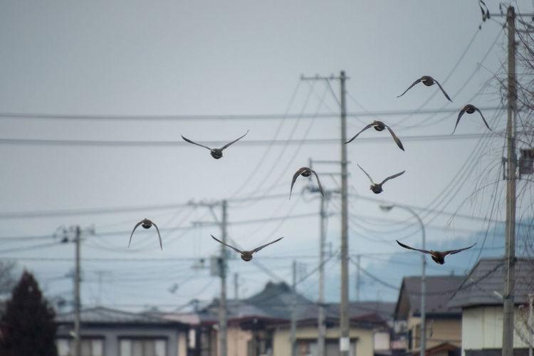 Birds flying over electricity pylon against sky