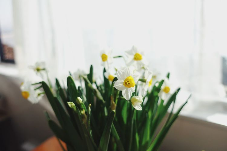 Flowering Plant Flower Plant Freshness Close-up Beauty In Nature Nature Flower Head Indoors  No People Growth Day Springtime Focus On Foreground Yellow White Sunny Sunshine Daylight Blooming Spring Green Color Flower Arrangement Sunlight Still Life