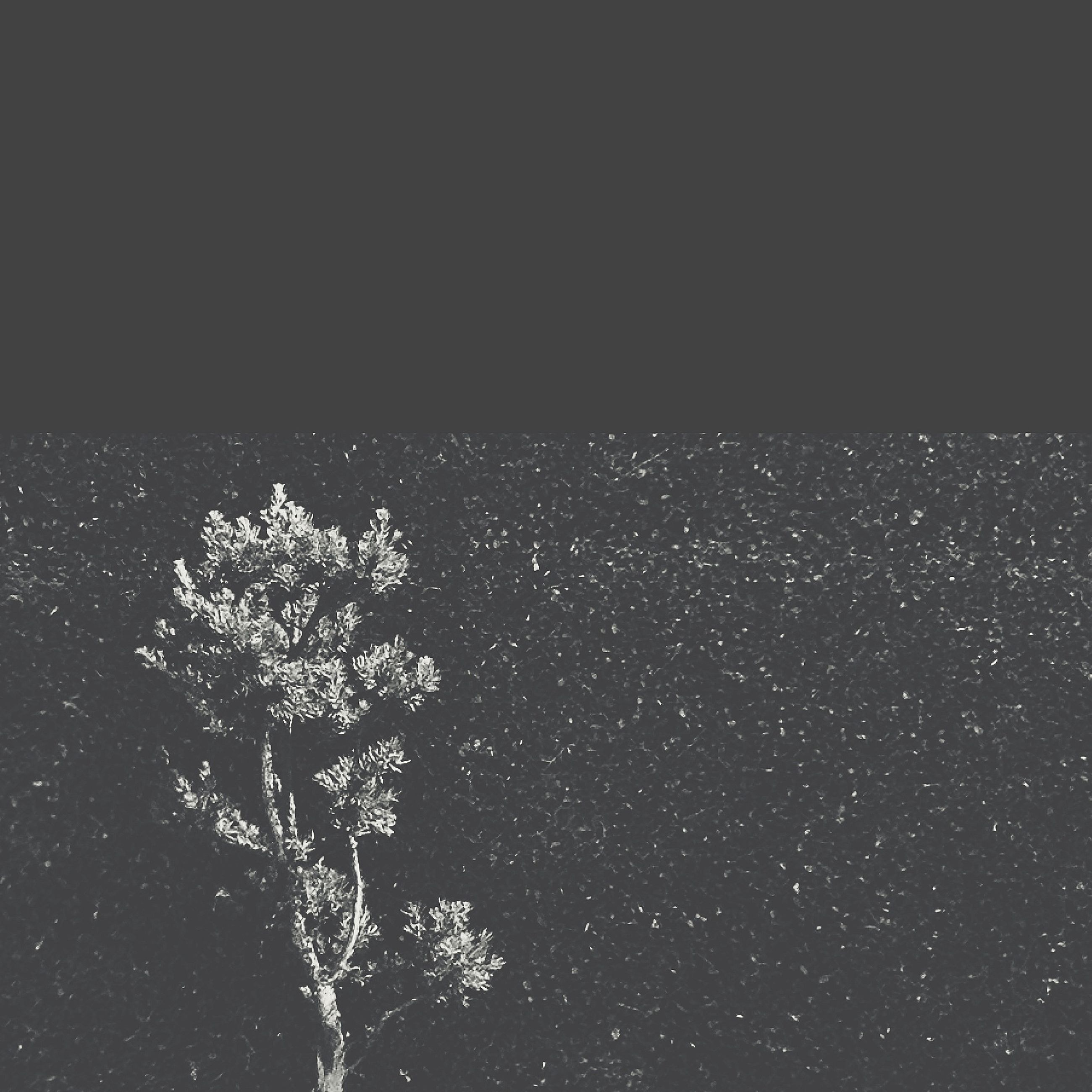night, copy space, beauty in nature, nature, tree, clear sky, tranquility, growth, scenics, tranquil scene, dark, no people, sky, branch, outdoors, high angle view, idyllic, plant, low angle view