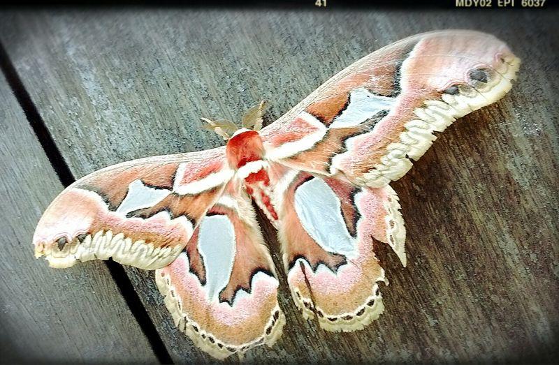 Oya Nature Mariposas Colors Natureza <3 Life Vida
