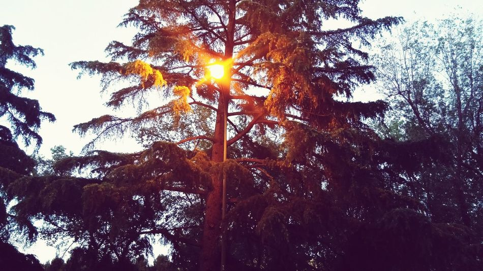 Un falso sol Hugging A Tree Hello World Madrid Spain Spring Has Arrived Sky And Clouds Enjoying The Sun