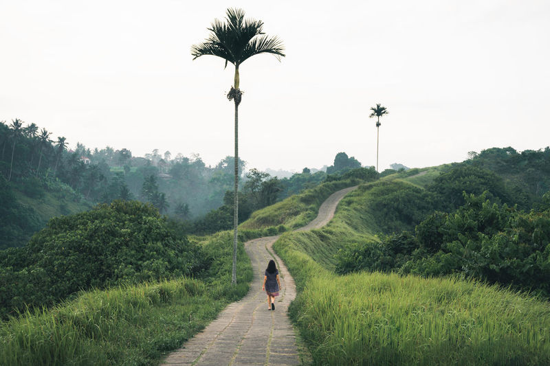 One girl walking a path over green hills between two lonely palm trees in Ubud, Bali Bali Bali, Indonesia Balinese Life Campuhan Ridgewalk Freedom Nature Recreation  Travel Travel Photography Ubud, Bali Campuhan Ridge Walk Famous Place Green Color Green Hills Landscape Lonely Palm Tree Nature One Girl Only One Person Walking One Woman Only Outdoors Travel Destinations Ubud Vacation Walking Press For Progress