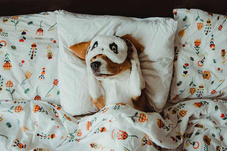 Nuca the beagle, sleepy dog in the bed Indoors  Animal Dog Canine One Animal Mammal Domestic Animals Pets Domestic Vertebrate Furniture Bed Relaxation No People High Angle View Animal Themes Resting Textile Animal Representation Bedroom Floral Pattern Animal Head  Duvet Beagle IKEA My Best Photo My Best Photo