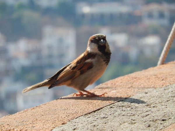 Animal Themes Bird Birds_collection City