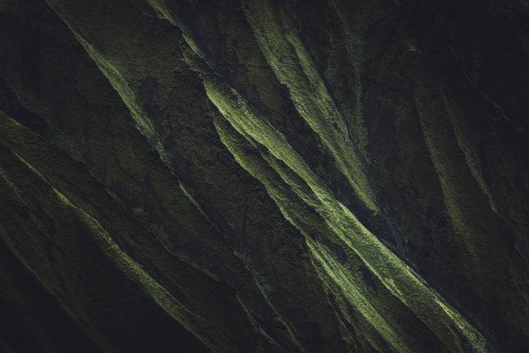 Close-up of leaf on rock