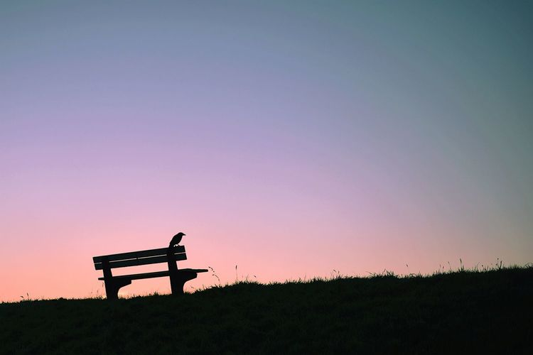 Bench Silhouette Tranquil Scene Tranquility Sitting Beauty In Nature Scenics Escapism Nature Orange Color Outdoors Romantic Sky Bird Backlight Dawn Morning Early Morning Earlybird Light And Shadow Sun Sunrise