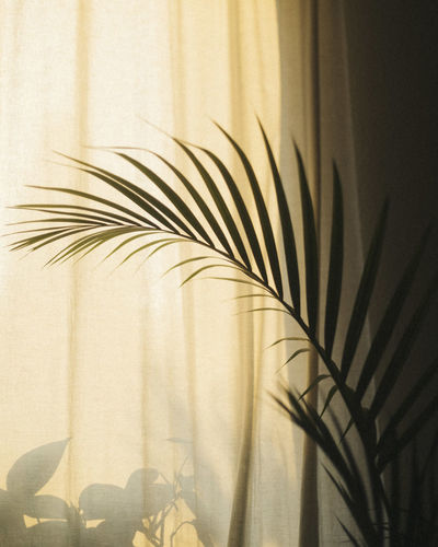 Close-up of palm leaves against blue wall