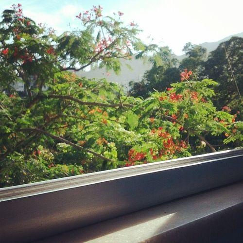 Quando o Sol bater na janela do teu quarto ♪ Absoluto Nascepratodos