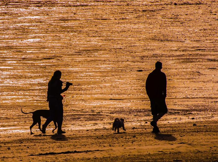 Summer Exploratorium Pets Togetherness Dog Full Length Silhouette Sunset Friendship Beach Sand Calm