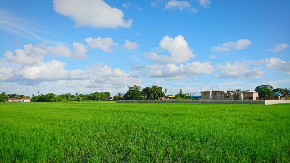 Cloud - Sky Rice Field No People Architecture Rice Paddy At Alor Setar Malaysia Sony Xperia Z5