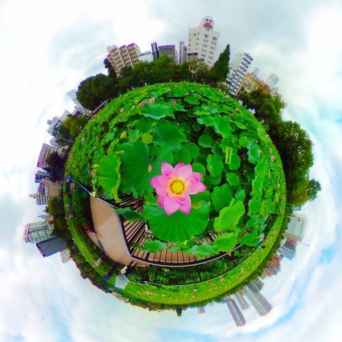 Little Planet Tiny Planet Lotus Pink Color Pond Summer Ueno Tokyo Japan Ricoh Theta S Theta360