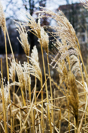 Close-up Day Dry Field Grass Growing Growth Nature No People Outdoors Plant Selective Focus