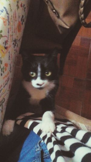 Cat Wainting