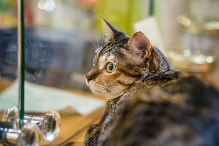 Meow . . . whiskers of different kind Animal Themes Close-up Day Domestic Cat Indoors  No People One Animal Pets
