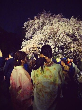 Rikugien Tokyo Kimono Kimonogirl Cherry Blossom Sakura Night Photography Citylife Light Up Cherry Blossom Viewing Good Night Yozakura City Life Garden Famous Place Todays Photography Yozakura Park Hanami Rikugien