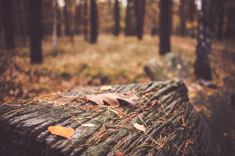 Autumn wood Forest Tree Land Plant Nature Tree Trunk Trunk WoodLand Day Selective Focus Wood - Material Wood Tranquility No People Timber Log Deforestation Field Plant Part Falling Outdoors Change Surface Level Bark Leaves