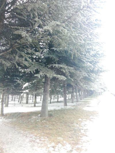 Cam Kış Ağaçlıyol Sdu