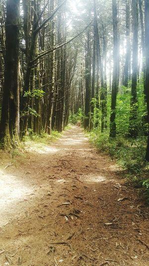 Tree Forest Nature Outdoors No People Costa Rica Bosque De La Hoja