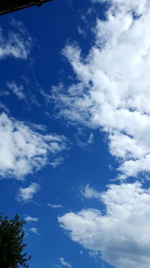 Beauty In Nature Blue Cloud - Sky Sky Low Angle View Nature Day No People Outdoors Beauty In Nature Tree