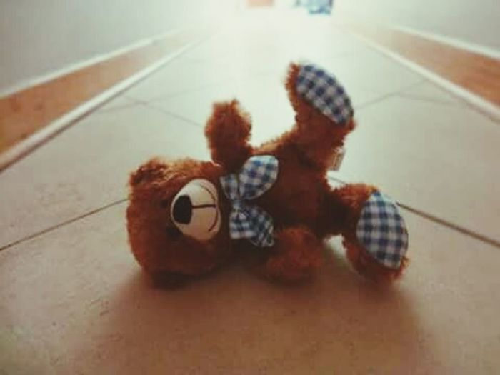 Teddy bear in hallway Kids Child Teddy Light Calm Indoors  One Man Only Only Men Adults Only Adult One Person People Music Day Young Adult Men Close-up