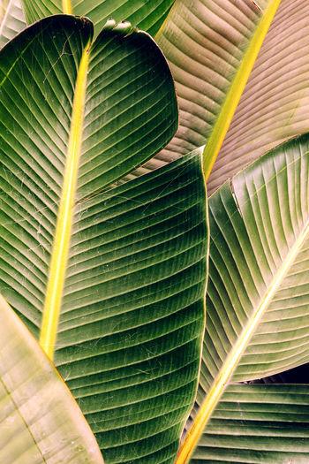 Palm leaf background. minimal tropical mood
