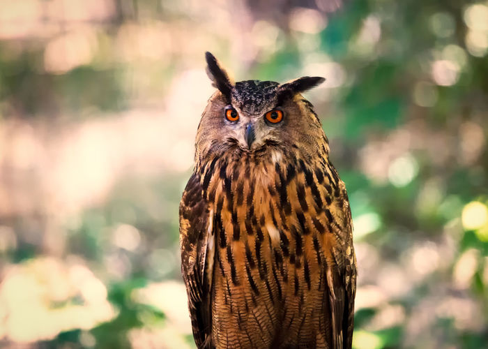 Animal Head  Animal Themes Beauty In Nature Bird Close-up Day Focus On Foreground Hawk Nature No People Outdoors Owl Perched Portrait