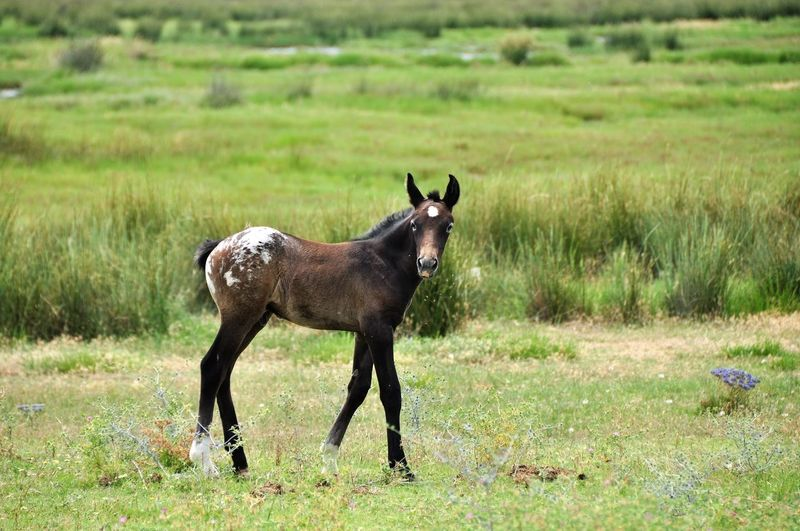 Animal Themes Baby Horses Beauty In Nature Field Foal Horse Focus On Foreground Grass Horses Landscape No People
