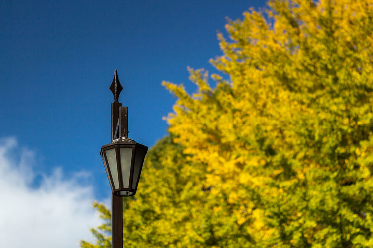 Japan Travel Architecture Autumn Blue Change Clear Sky Day Electric Lamp Lamp Lighting Equipment Nature No People Outdoors Plant Sky Street Street Light Travel Destinations Tree Yellow