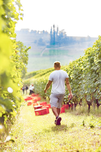 Rear view of man walking on pathway in vineyard