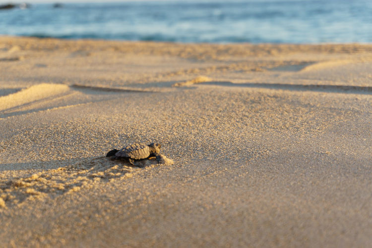 Close-up of small turtle in sand at beach