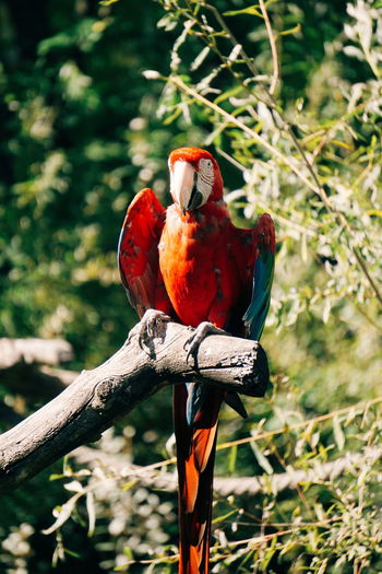 Close-Up Of Macaw Perching On Tree
