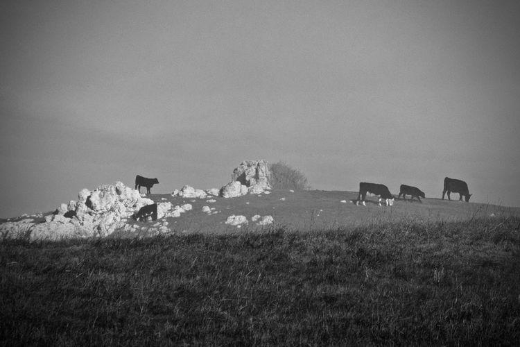 Pony grazing on grassy field