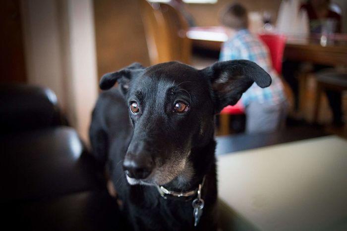 Portrait Pets Animal Black Labrador Dog Good Boy EyeEmNewHere Labrador Retriever Domestic Animals Portrait Photography