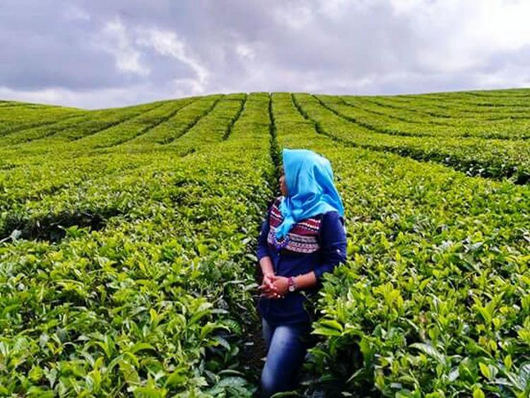 Fromindonesia Wisataindonesia Green Color Kebunteh Greentea Siantar Medan Indonesia Beuty Of Nature From Indonesia INDONESIA EyeEmNewHere