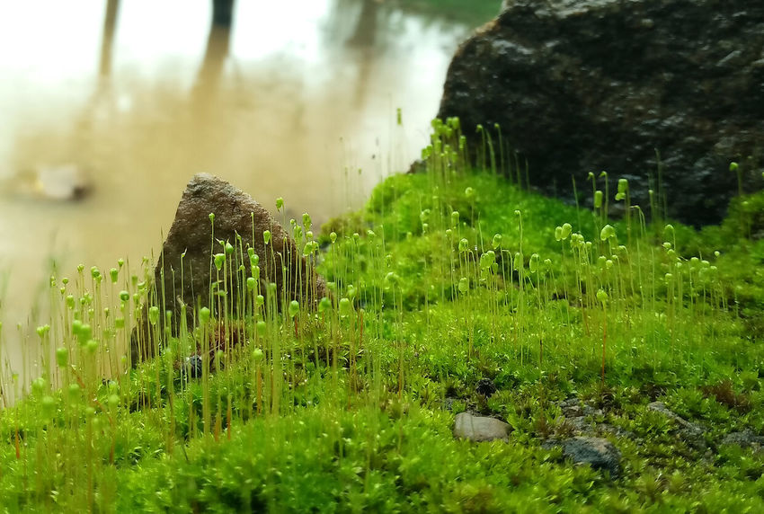 Color Of Life! Green Color Landscape Micro Nature Mobile Photography Moss In Macro Rock