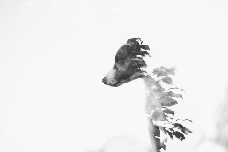 Close-up of a dog against the sky