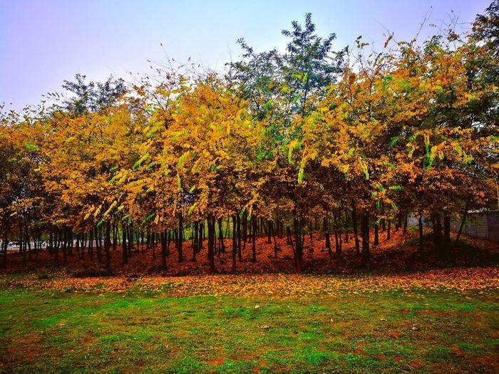 Autumn🍁🍁🍁 Autumncolour🎨💛🍂🍁🌧 Autumncolor Autumnleaves Autumnleafs Octobercolors October Day P9photography P9leica P9 Huawei