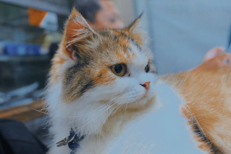 Cat and Life Animal Pets Domestic Domestic Animals Domestic Cat Cat Animal Themes Close-up Looking Focus On Foreground Animal Head  Cats Lovers  Cat Lovers Cat Photography Cat Portrait Cat Family Animals Animal Photography Domestic Life Animal Domestique EyeEmNewHere